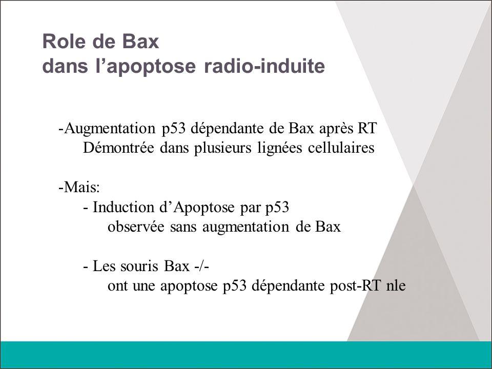 Role de Bax dans l'apoptose radio-induite