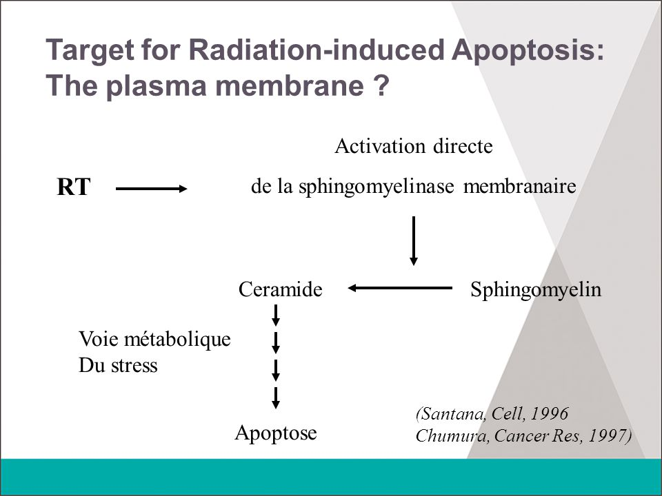 Target for Radiation-induced Apoptosis: The plasma membrane