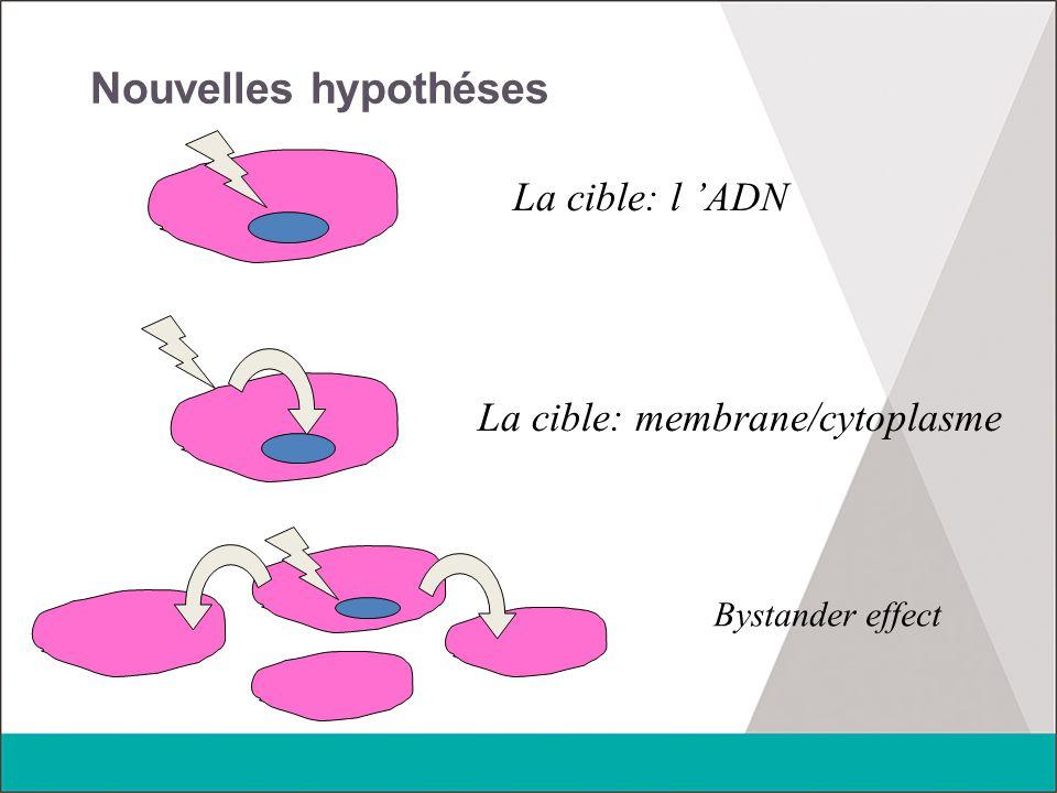 Nouvelles hypothéses La cible: l 'ADN La cible: membrane/cytoplasme