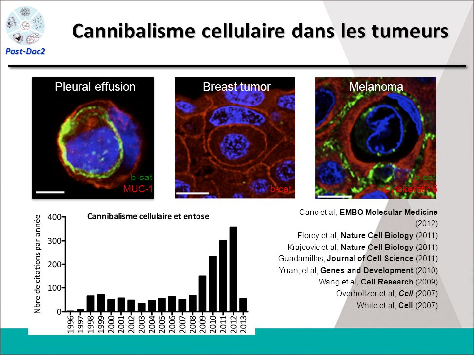 Cannibalisme cellulaire dans les tumeurs