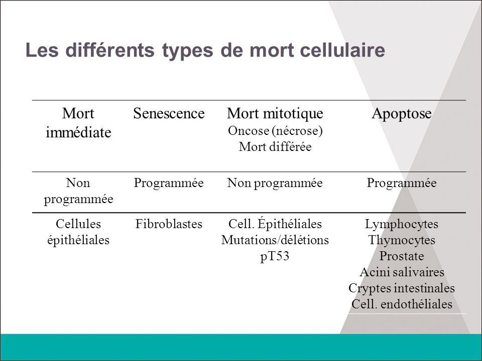 Les différents types de mort cellulaire