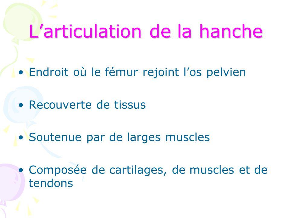 L'articulation de la hanche