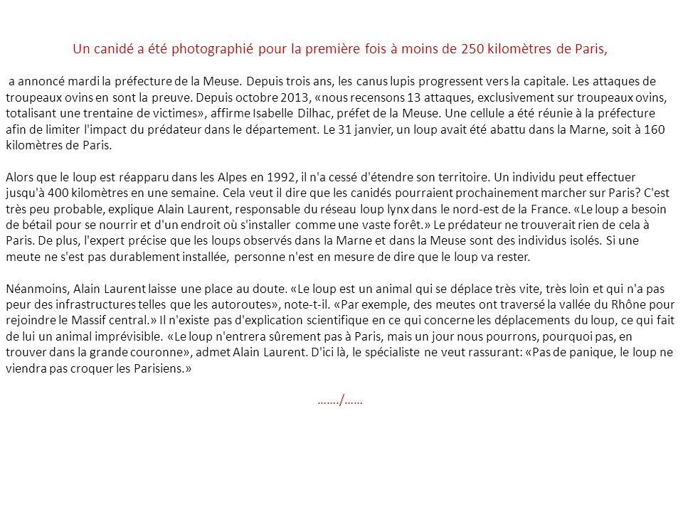 Les loups sont entr s dans paris ppt video online for Chambre commerciale 13 octobre 1992