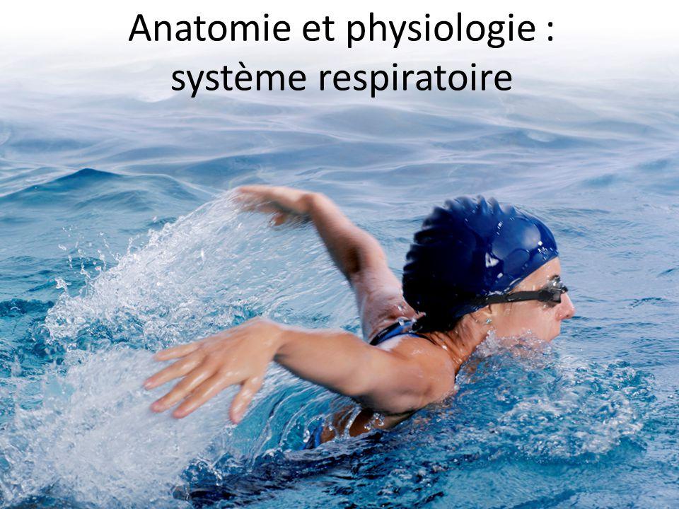 Ausgezeichnet Anatomie Und Physiologie Im Sport Galerie - Anatomie ...