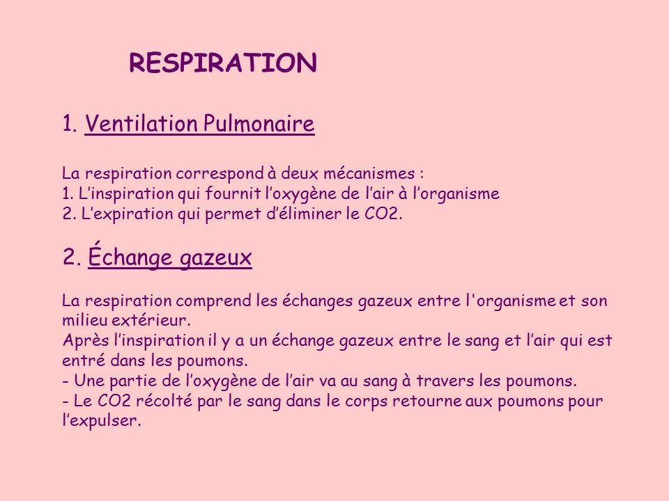 1. Ventilation Pulmonaire