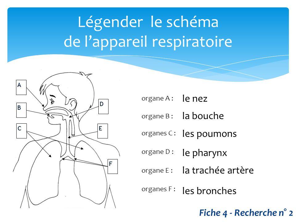 Légender le schéma de l'appareil respiratoire