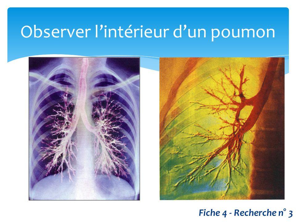 Observer l'intérieur d'un poumon