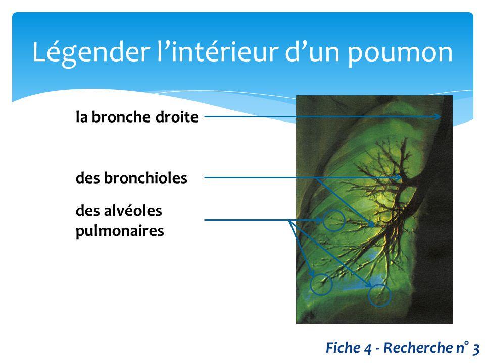 Légender l'intérieur d'un poumon