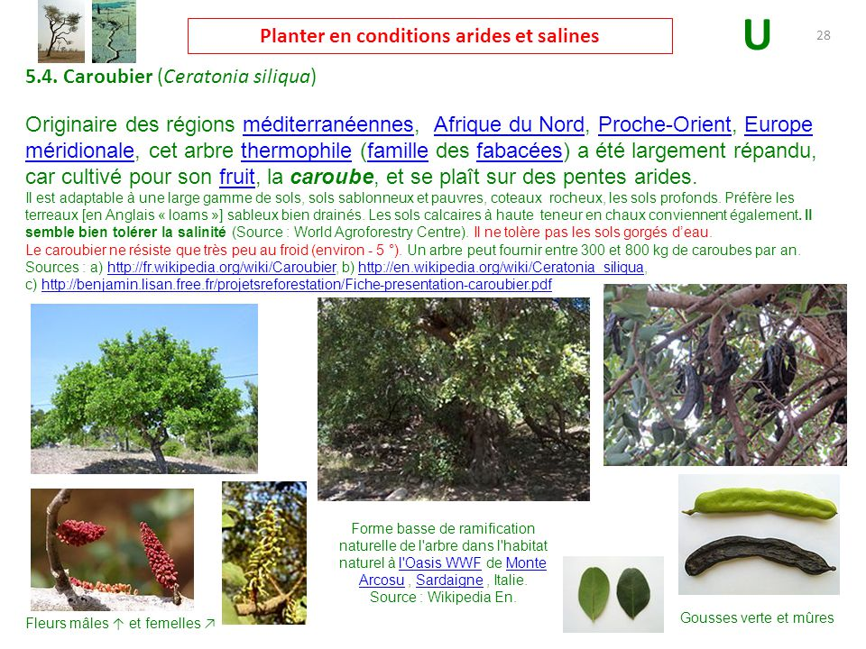 planter en conditions arides et salines ppt t l charger On planter en anglais