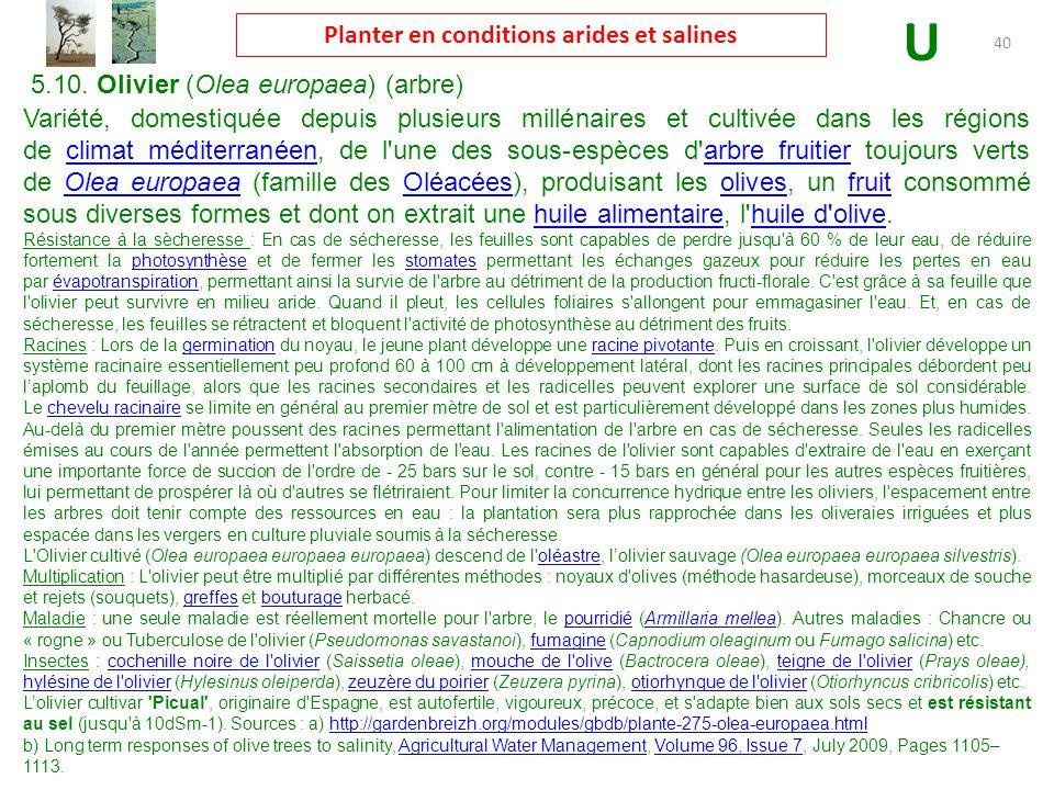Planter en conditions arides et salines ppt t l charger - Cochenille noire de l olivier ...