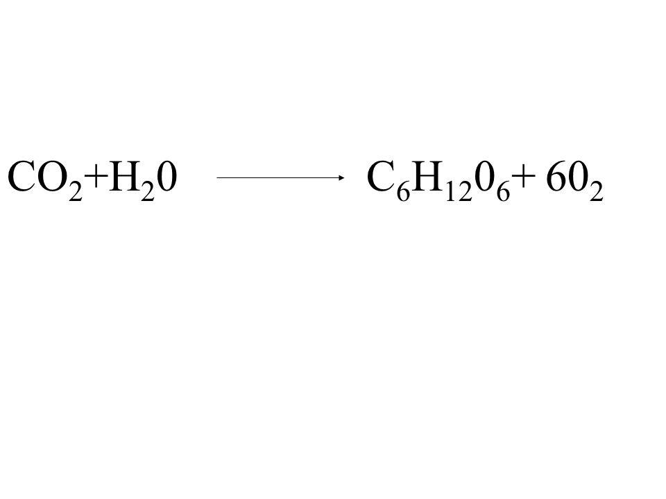 CO2+H20 C6H1206+ 602