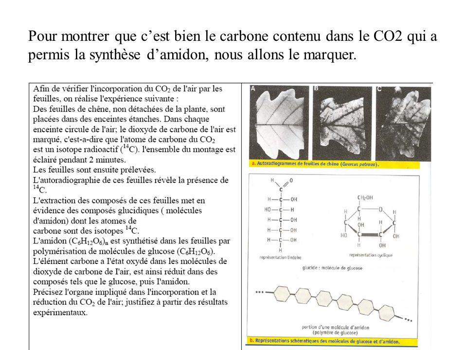 Pour montrer que c'est bien le carbone contenu dans le CO2 qui a permis la synthèse d'amidon, nous allons le marquer.