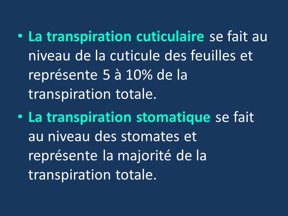 La transpiration cuticulaire se fait au niveau de la cuticule des feuilles et représente 5 à 10% de la transpiration totale.