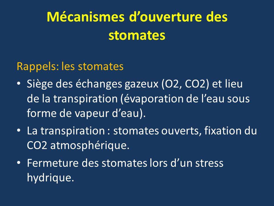 Mécanismes d'ouverture des stomates