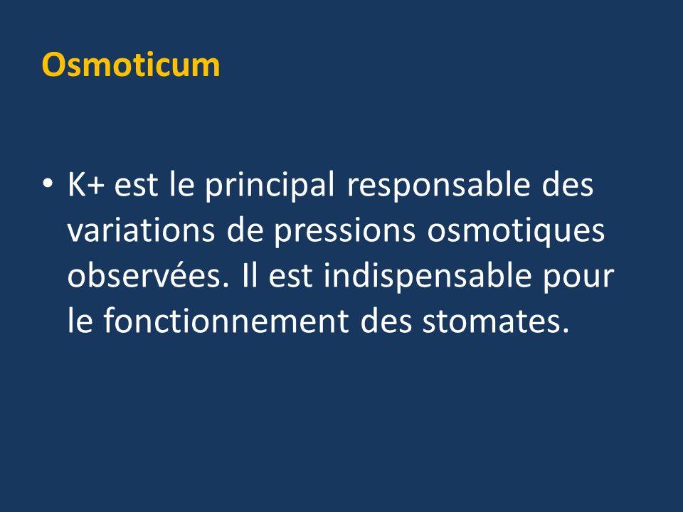 Osmoticum K+ est le principal responsable des variations de pressions osmotiques observées.