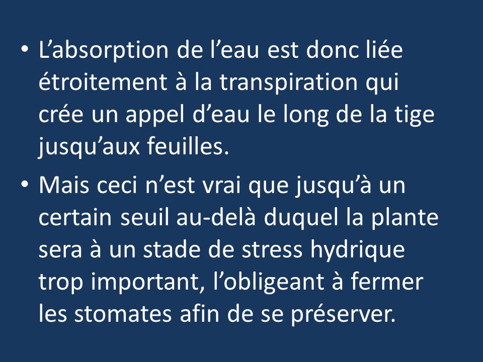 L'absorption de l'eau est donc liée étroitement à la transpiration qui crée un appel d'eau le long de la tige jusqu'aux feuilles.