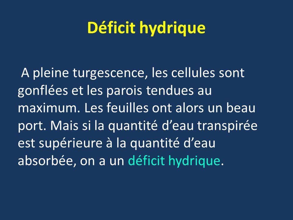 Déficit hydrique