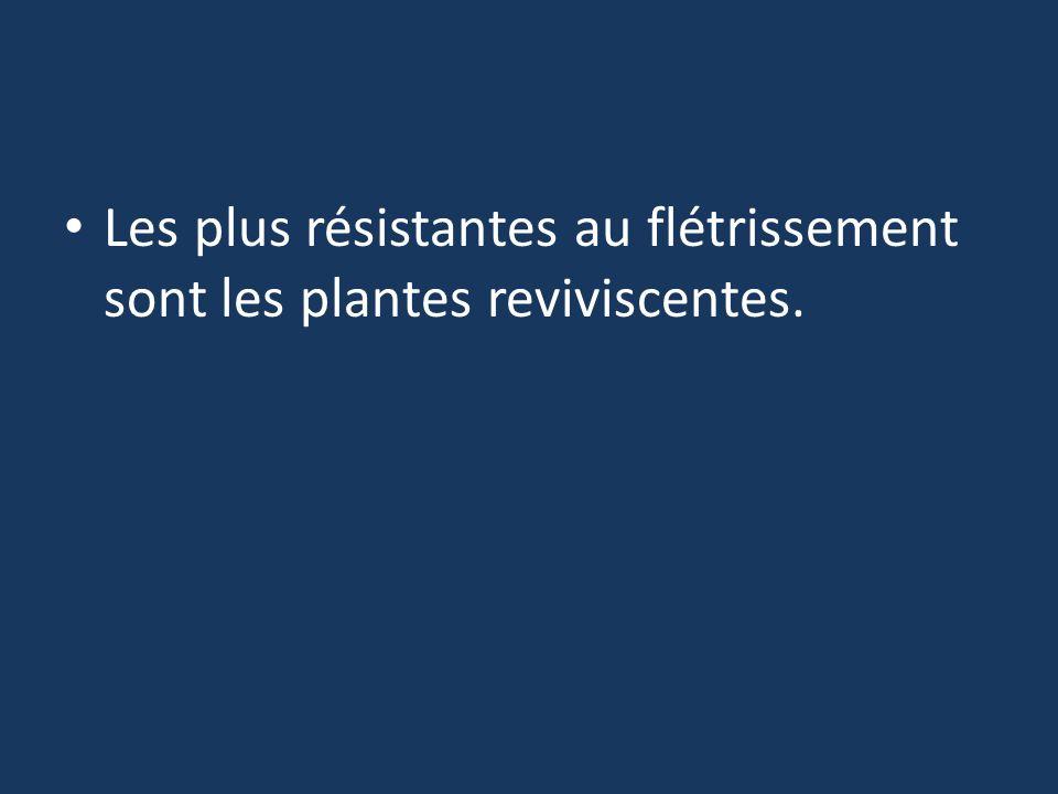 Les plus résistantes au flétrissement sont les plantes reviviscentes.
