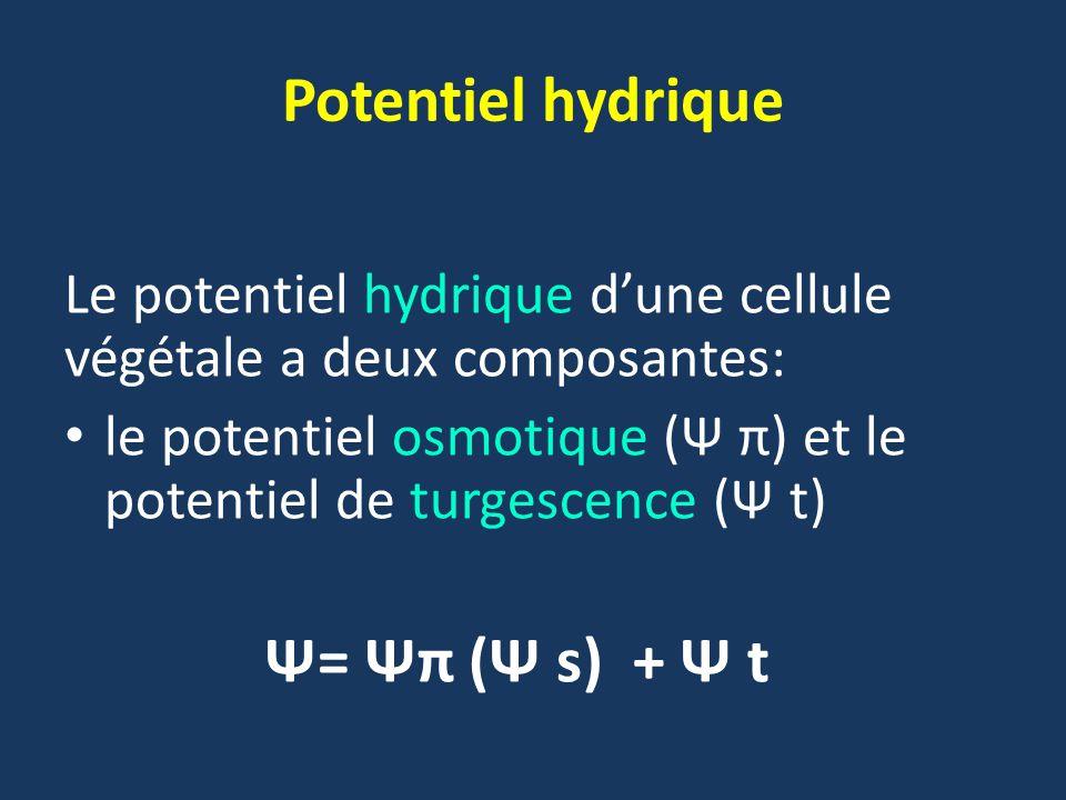 Potentiel hydrique Le potentiel hydrique d'une cellule végétale a deux composantes: