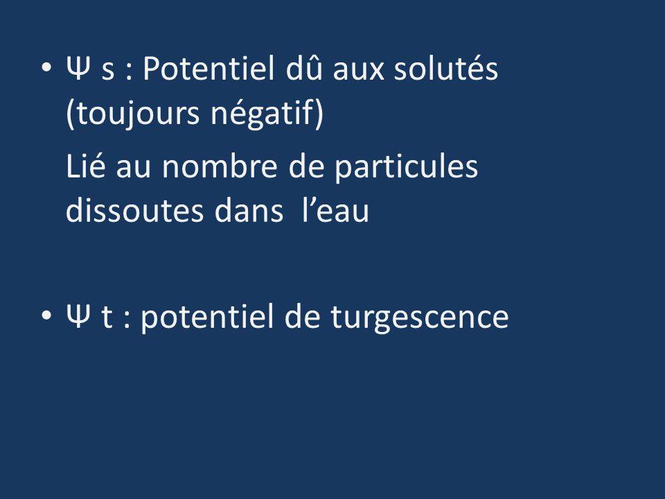 Ψ s : Potentiel dû aux solutés (toujours négatif)