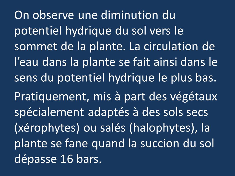 On observe une diminution du potentiel hydrique du sol vers le sommet de la plante.