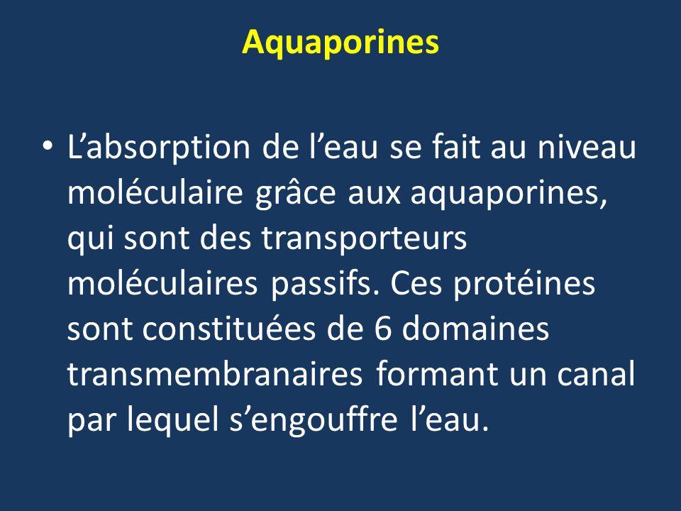 Aquaporines