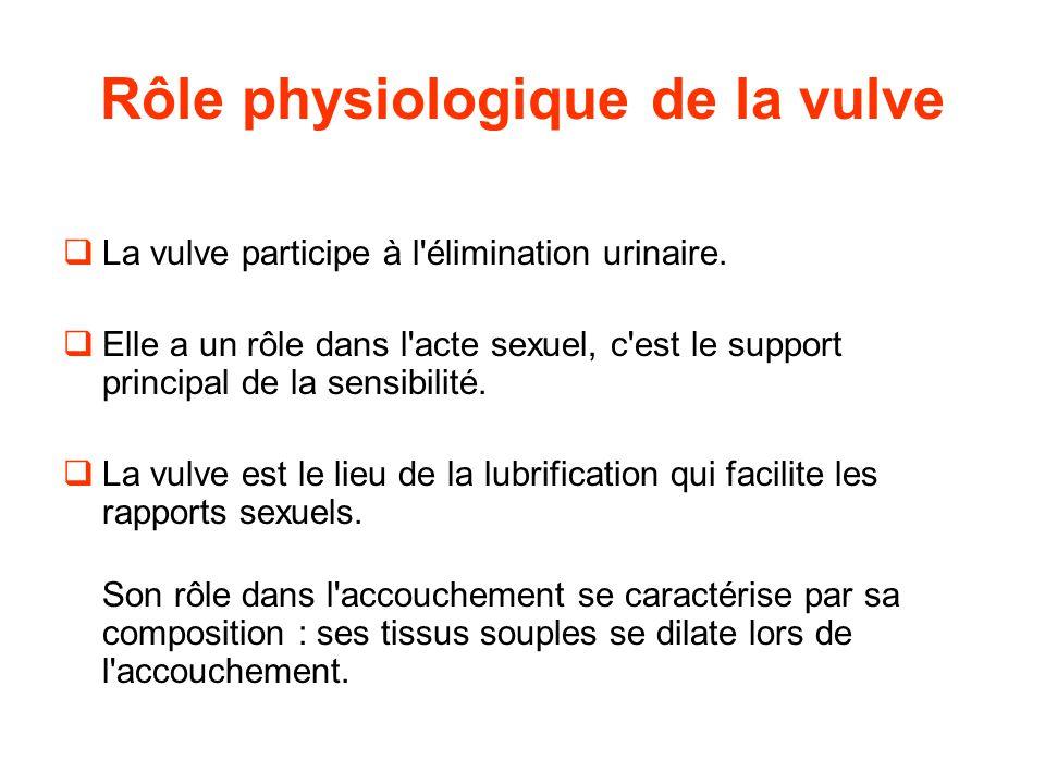 Rôle physiologique de la vulve
