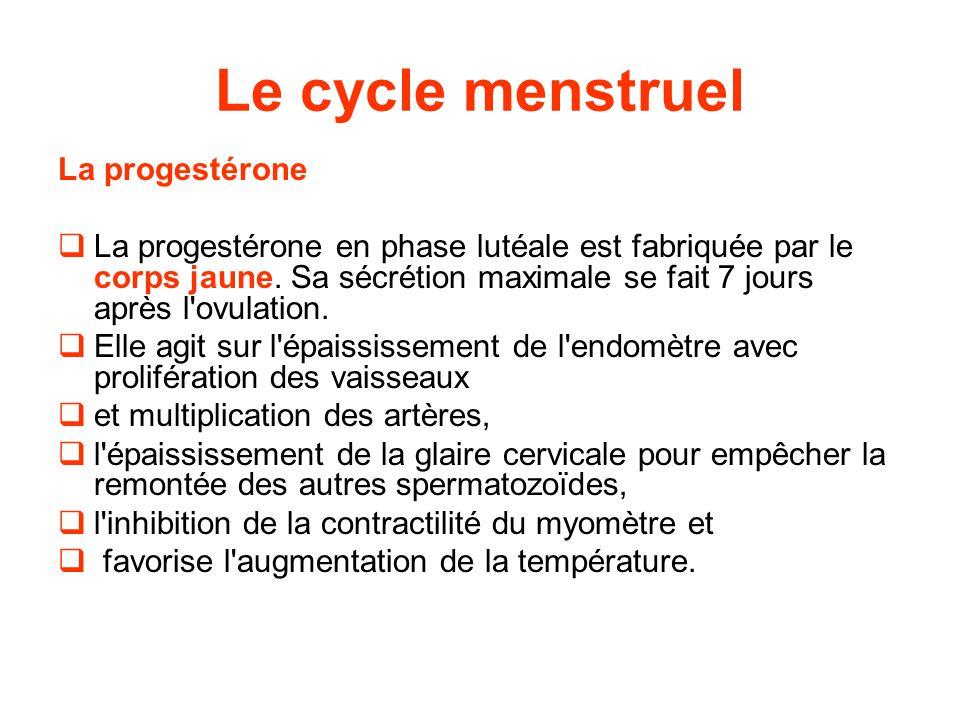 Le cycle menstruel La progestérone