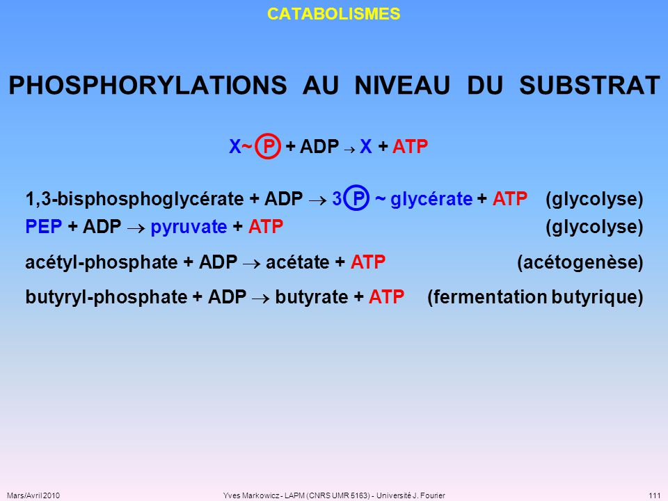 PHOSPHORYLATIONS AU NIVEAU DU SUBSTRAT