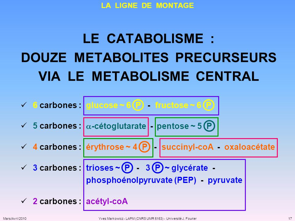 DOUZE METABOLITES PRECURSEURS VIA LE METABOLISME CENTRAL