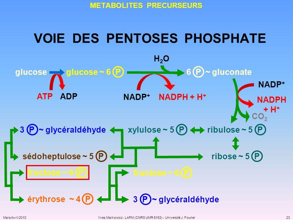 METABOLITES PRECURSEURS