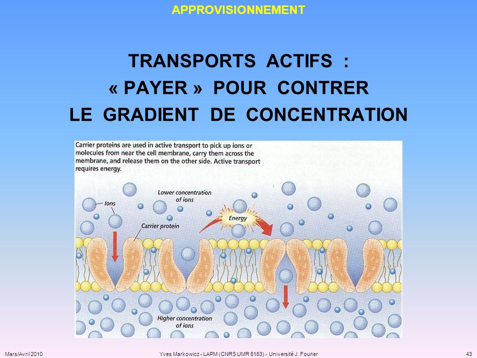 LE GRADIENT DE CONCENTRATION