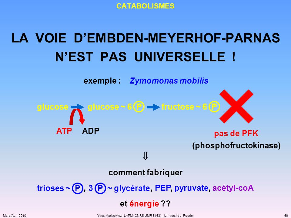 LA VOIE D'EMBDEN-MEYERHOF-PARNAS (phosphofructokinase)