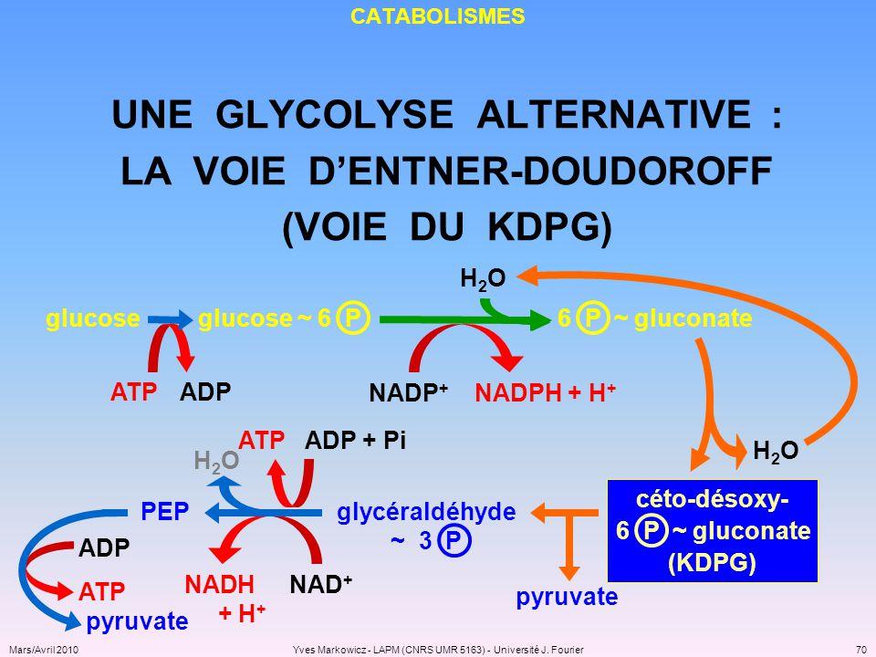 UNE GLYCOLYSE ALTERNATIVE : LA VOIE D'ENTNER-DOUDOROFF
