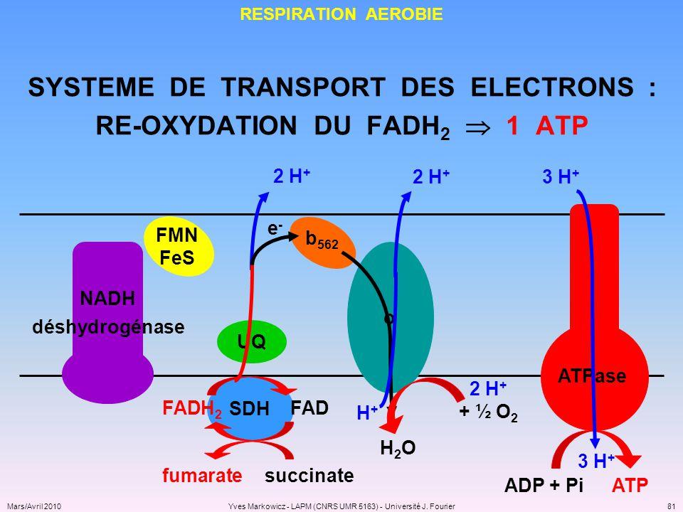 SYSTEME DE TRANSPORT DES ELECTRONS : RE-OXYDATION DU FADH2  1 ATP
