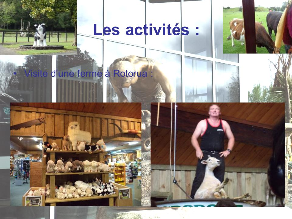 Les activités : Visite d'une ferme à Rotorua :