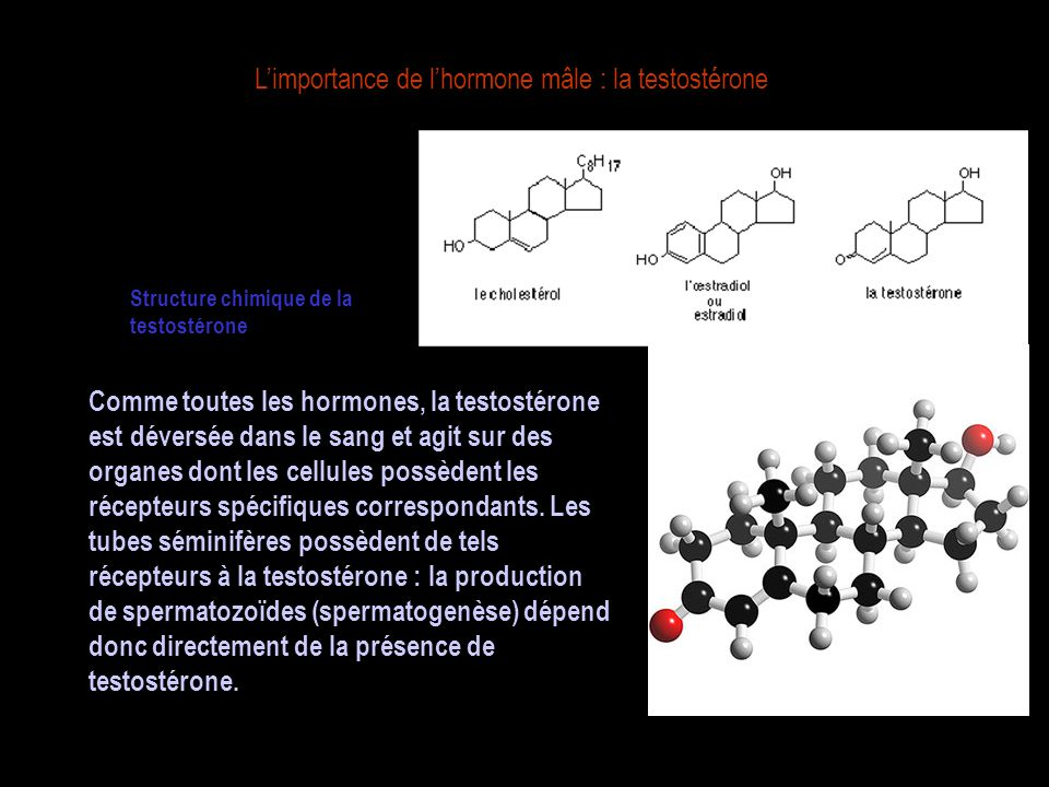 L'importance de l'hormone mâle : la testostérone