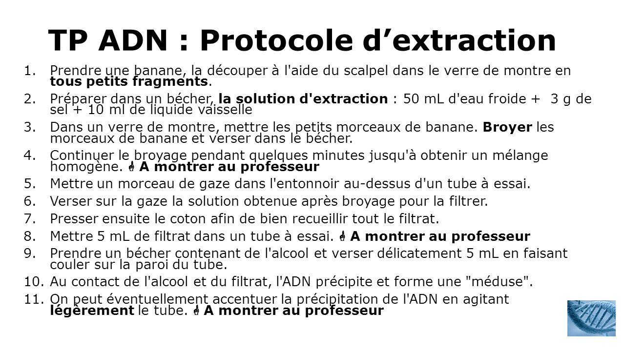 TP ADN : Protocole d'extraction