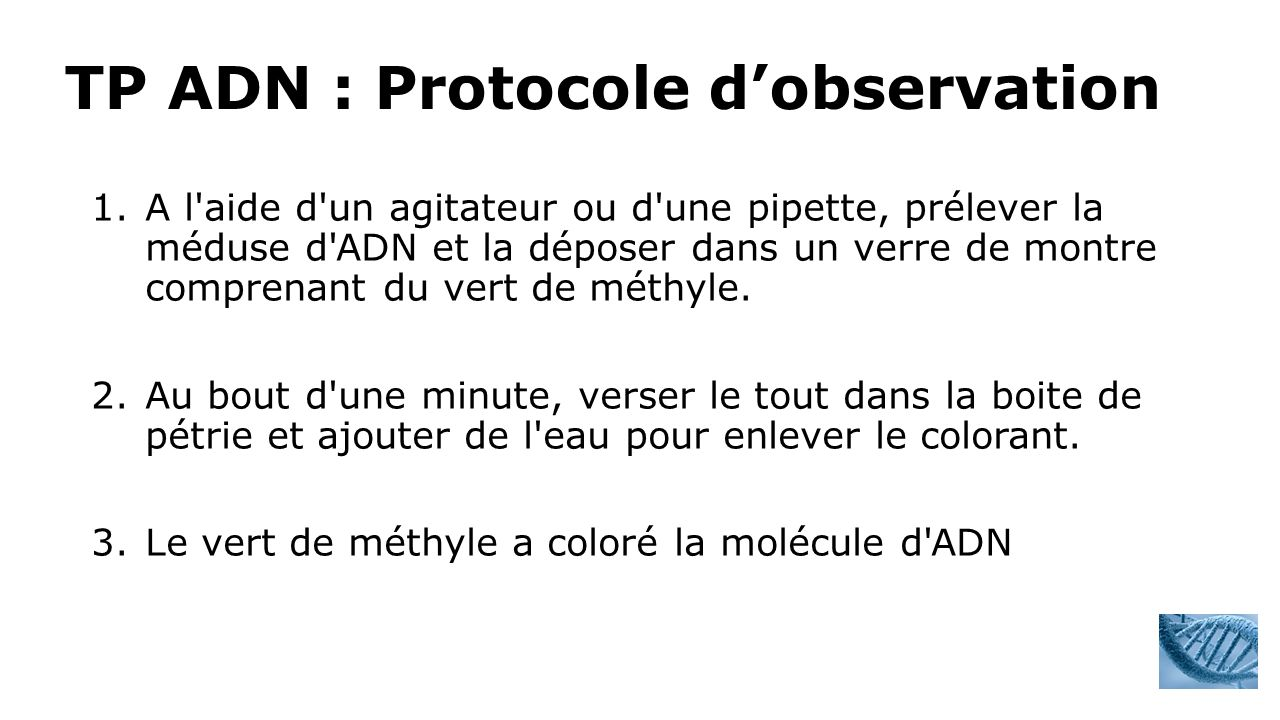 TP ADN : Protocole d'observation