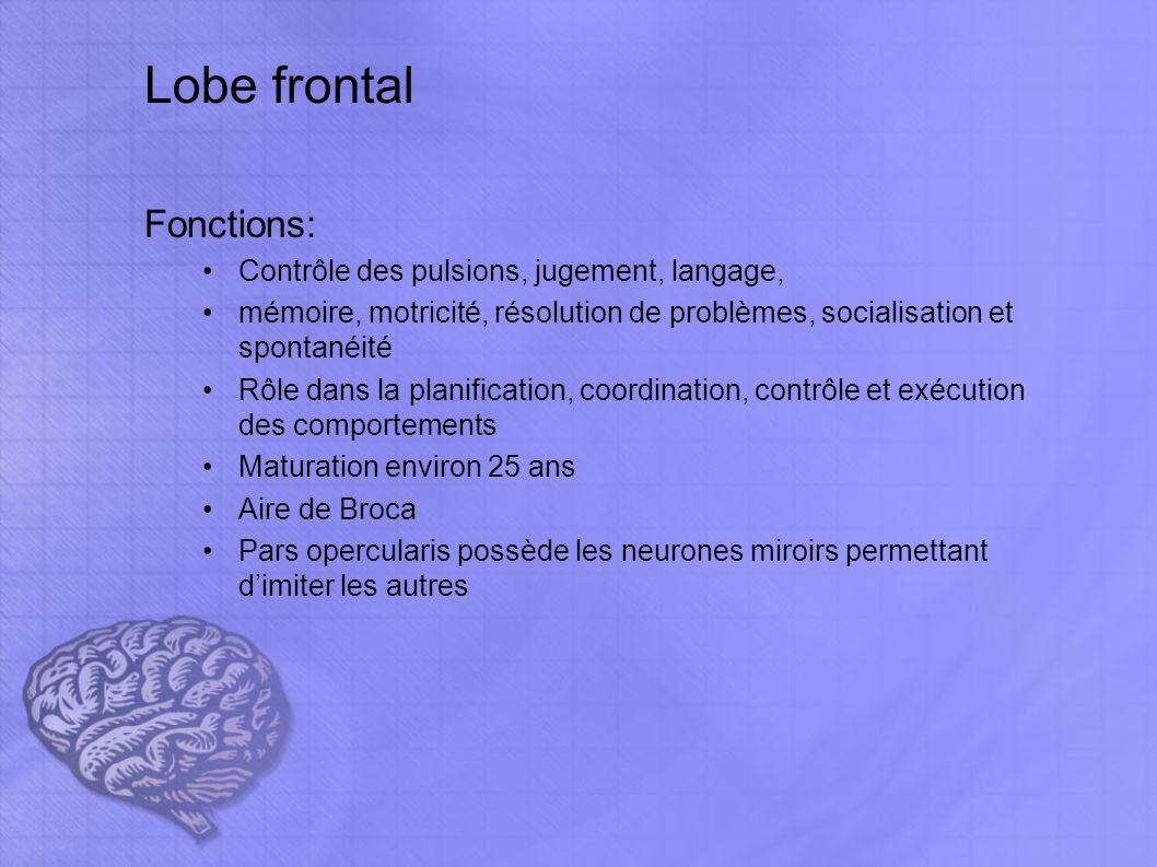 lobe frontal rôle