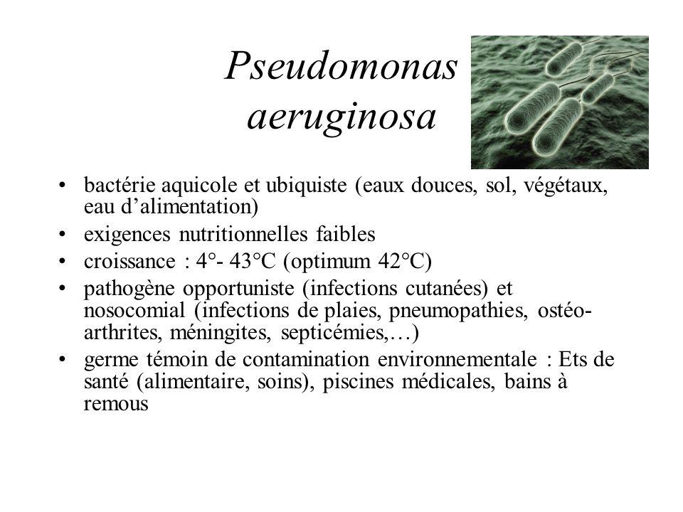 pseudomonas aeruginosa and nosocomial infections