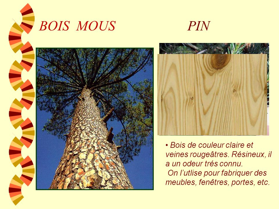 BOIS MOUSPIN.