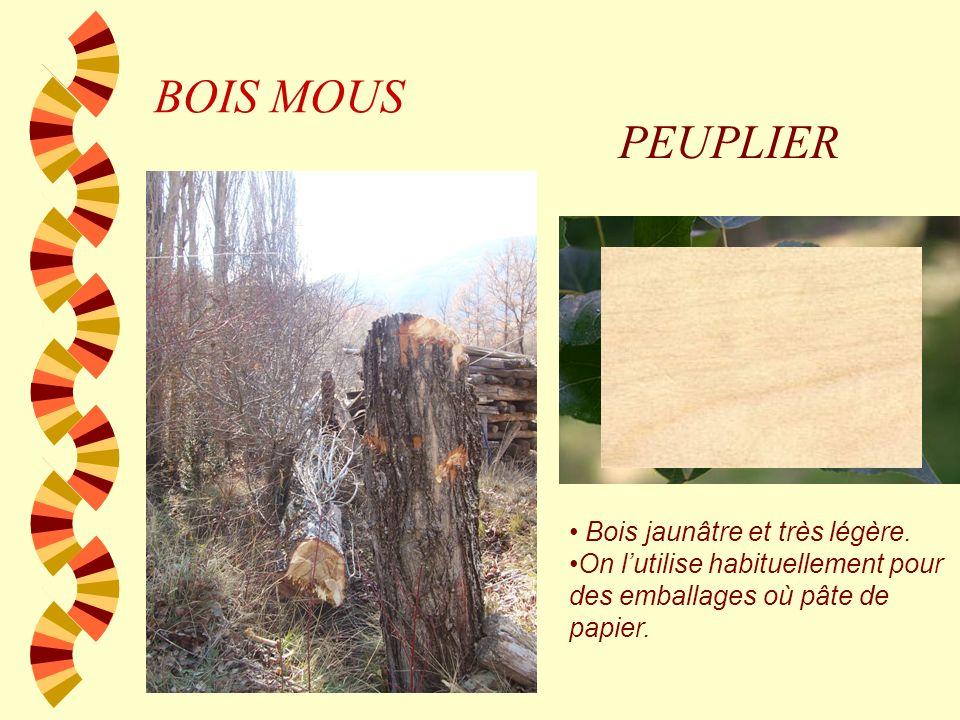 BOIS MOUS PEUPLIER Bois jaunâtre et très légère.