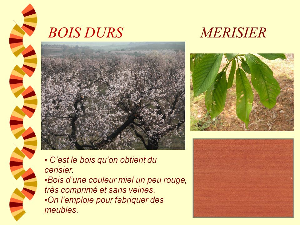 BOIS DURS MERISIER C'est le bois qu'on obtient du cerisier.