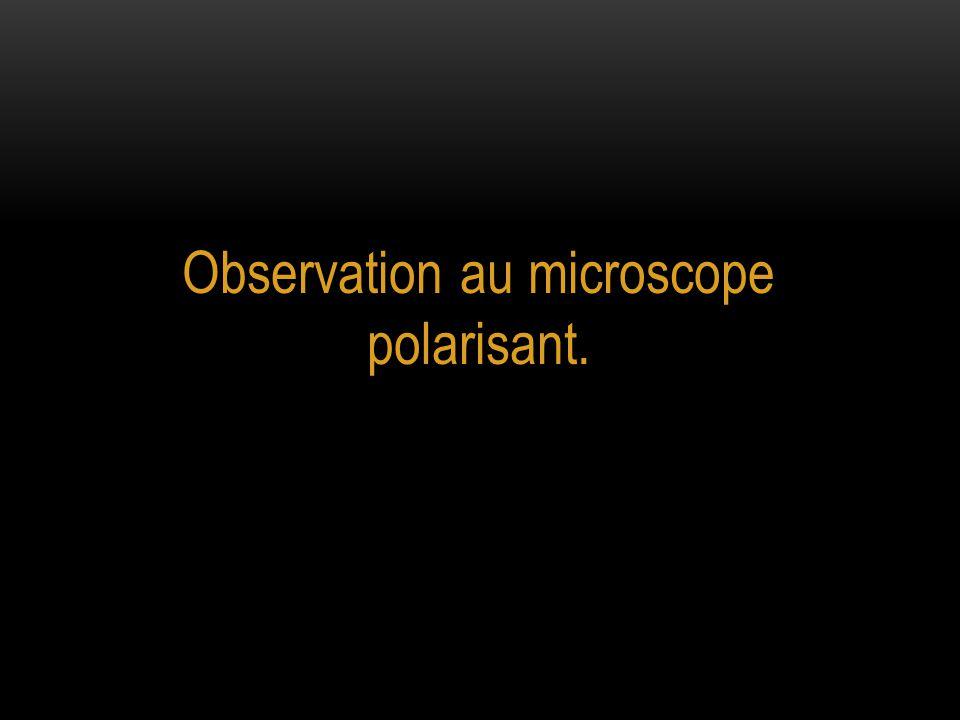 Observation au microscope polarisant.