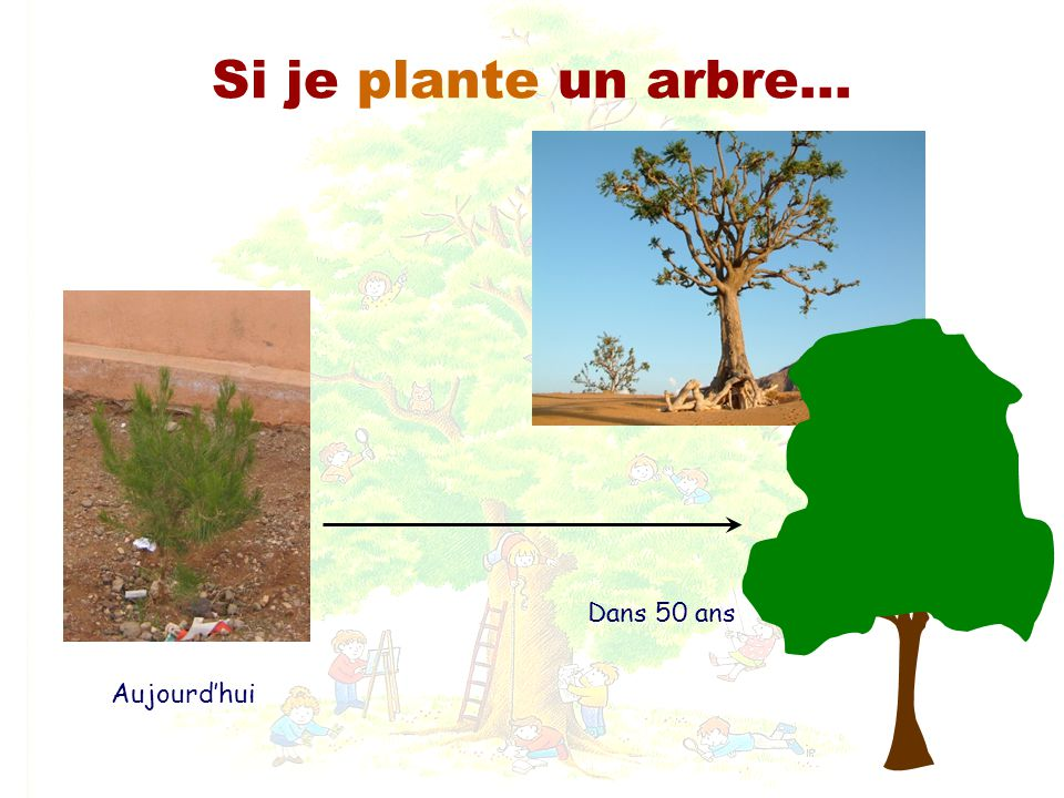 L arbre association mca marcher conna tre agir ppt for Plante un arbre