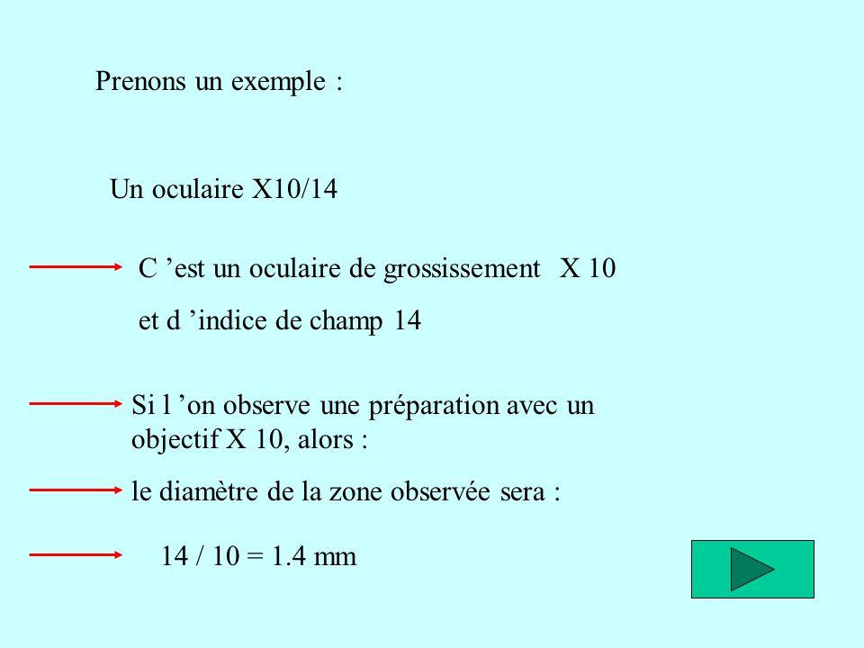 Prenons un exemple : Un oculaire X10/14. C 'est un oculaire de grossissement X 10. et d 'indice de champ 14.