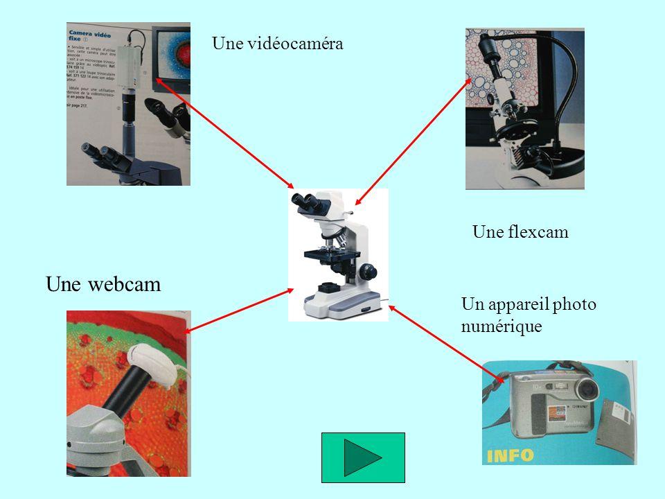 Une vidéocaméra Une flexcam Une webcam Un appareil photo numérique