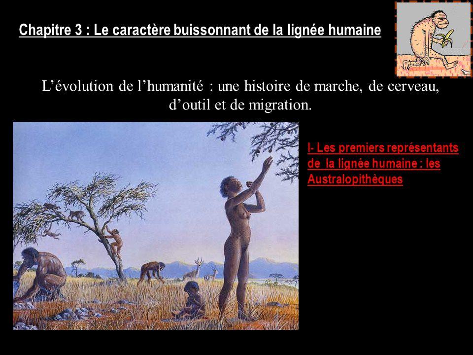 Chapitre 3 : Le caractère buissonnant de la lignée humaine