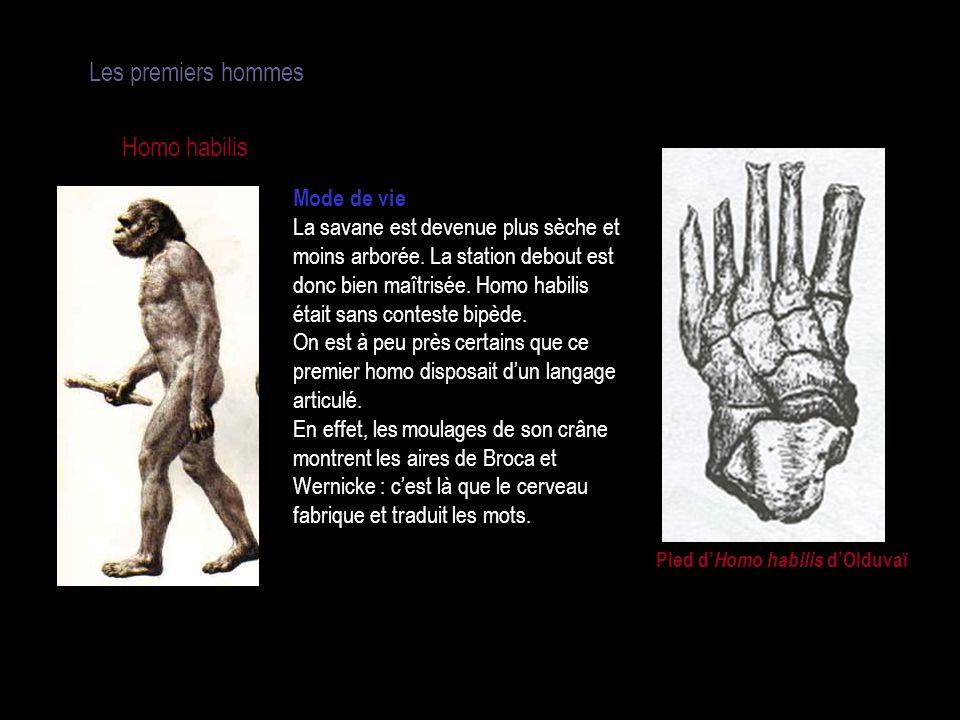 Pied d'Homo habilis d'Olduvaï